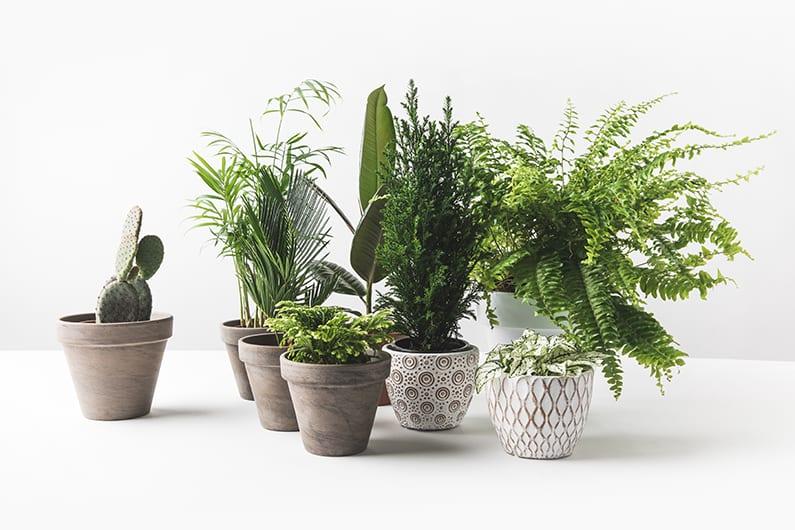 Selling Online Plants